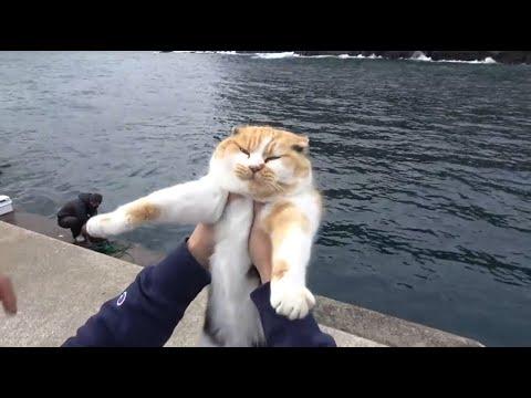釣り場で虐められてた猫が幸せになるまでの軌跡!釣りよかよーらいさん達3人