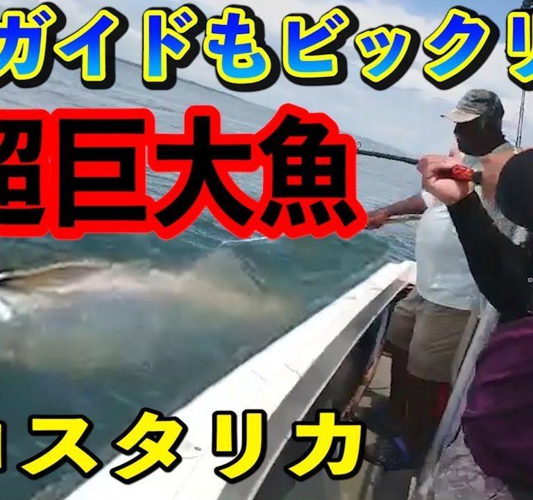 コスタリカで巨大魚ターポン!?釣り上げシーン