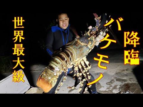 2mの浅瀬に巨大ニシキエビが現れた!沖縄の魚突きを地域振興