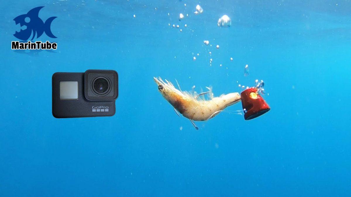 水深70mの海にGoProとエビを付けた一つテンヤ落としたときの真鯛のヒットシーン