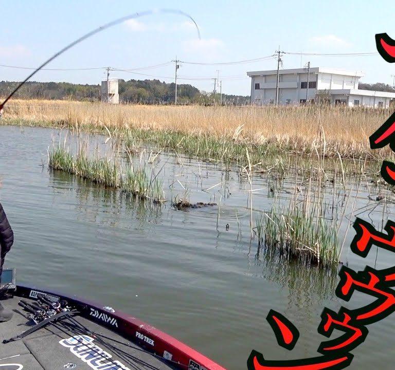 やっときた!世界を股に掛ける並木さんの釣り動画チャンネル!