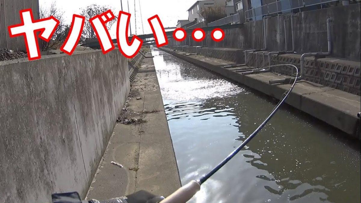 ドブ川で小物釣りをしていたらとんでもない大物がヒット!!大苦戦
