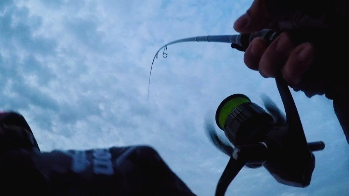 青物、ヒラメ、タチウオを狙いに朝から晩まで釣り