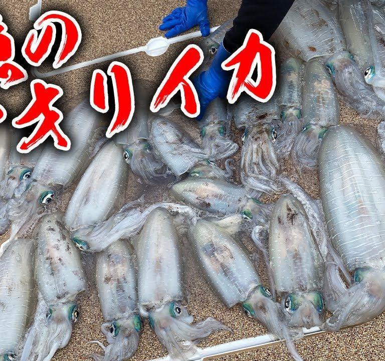 アオリイカ釣りの釣果が凄すぎ 釣りよかでしょ
