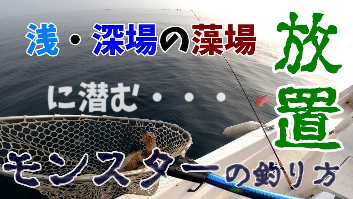 浅場・深場の藻場に放置!?その場所に潜むアオリイカの釣り方