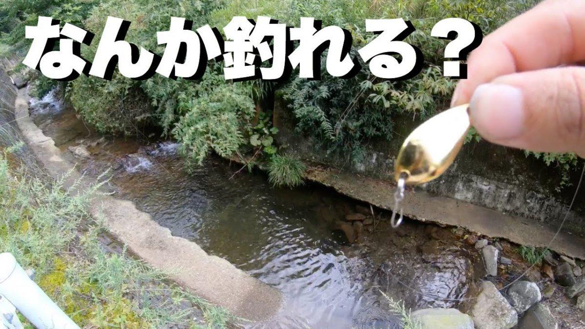 小さい川で軽~いスプーン投げたら何が釣れる?