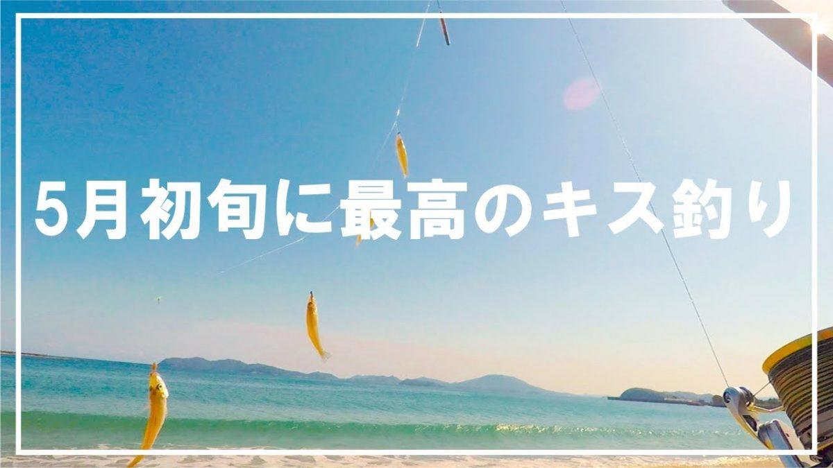 【キス釣り】超爽快!気持ちよい5月初旬に最高のキス釣り