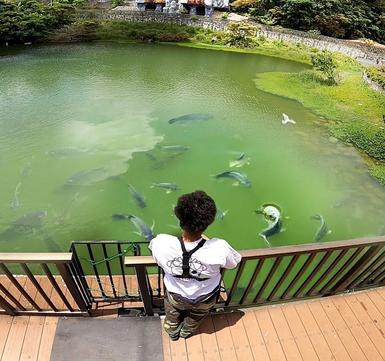 某動物園の絶対に釣りをしてはいけない場所で釣りしてみた