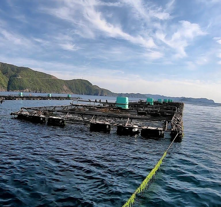 水深50mもある養殖イケス横で釣りしたら予想外の巨大魚が食いついた