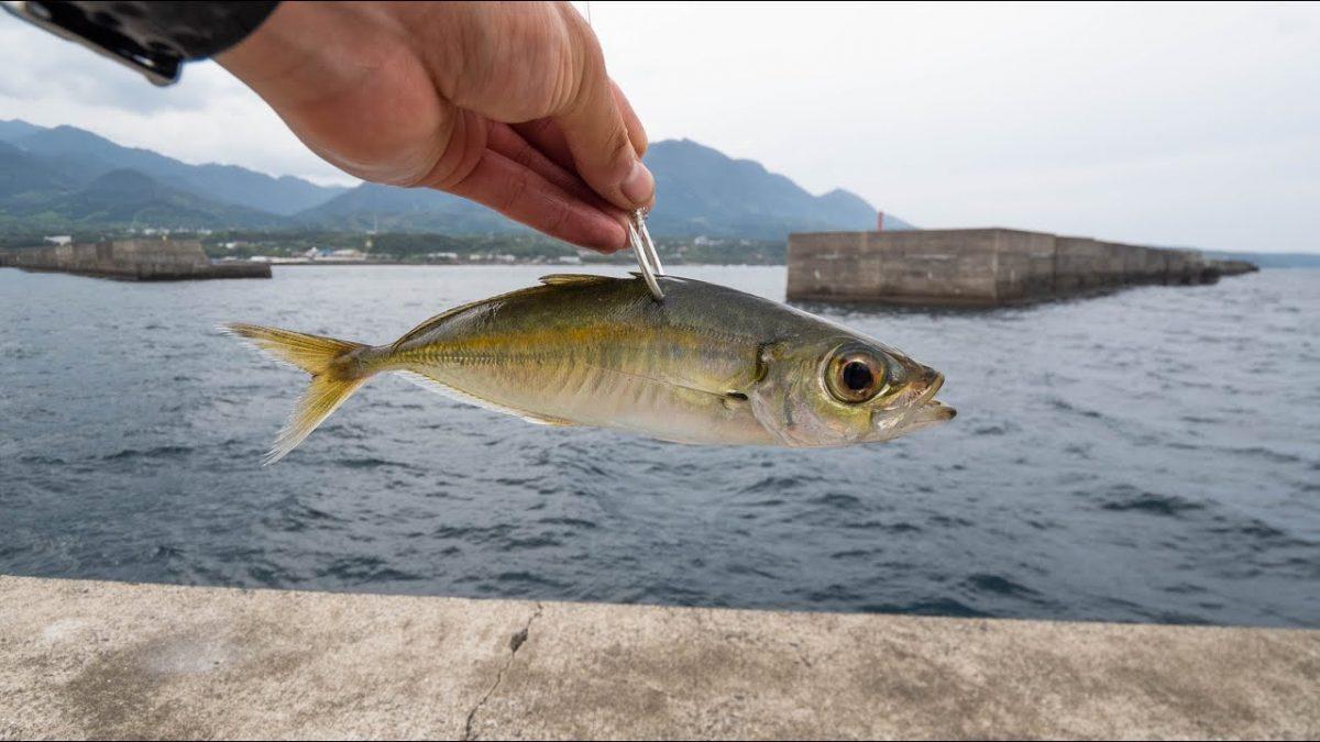 未知の堤防でアジの泳がせしてると86センチ、6.5キロの南方大物アオチビキ釣れる!