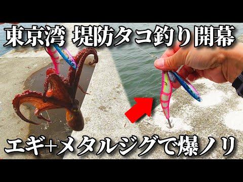 エギ+メタルジグで差が付く!2021年6月東京湾堤防タコ釣り開幕