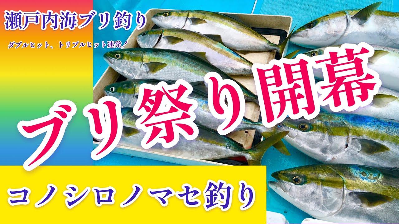 岡山コノシロノマセでブリ釣り船上ブリ祭り開幕!