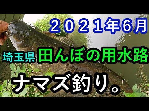 埼玉県【田んぼの用水路】でナマズ釣り。2021年6月!!