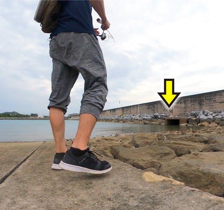近場の港。石積みや水路など魚がいそうな場所にルアーを投げると