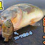 "<span class=""title"">【バス釣り】今まで釣れなかった見えたバスを釣る簡単な方法を教えます!</span>"