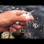 """<span class=""""title"""">テトラ帯から釣れた小サバを泳がせると‥一発で大物釣れた。</span>"""