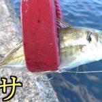 "<span class=""title"">堤防からは釣れないような魚を遂に仕留めた!!</span>"
