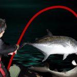 "<span class=""title"">一夜にしてサメとGTを釣りました【宮古島VS石垣島2021ver #5</span>"